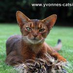 Das Katzenmodel